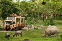 Bali Safari & Marine Park: Ingresso de 1 Dia
