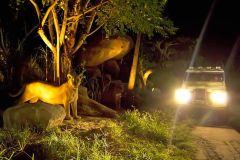 Safari de Bali e Parque Marinho: Night Safari Ticket