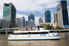 Cruzeiro Fluvial em Brisbane e Visita ao Santuário de Coalas
