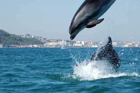 Arrábida Dolphins & Jeep Safari: tour di un giorno