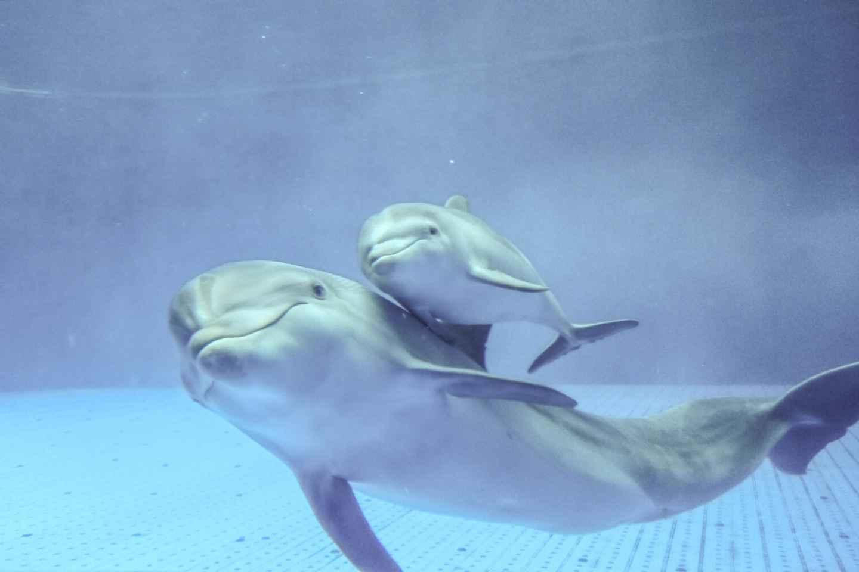 Genua: Führung durch das Aquarium von Genua
