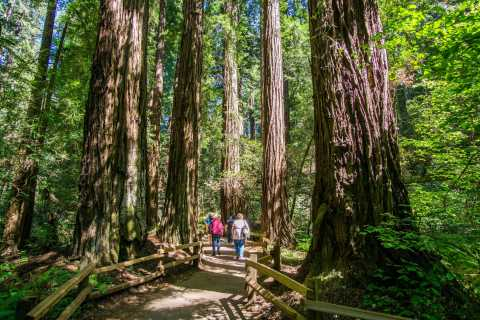 San Francisco: Muir Woods and Sausalito Experience
