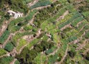 Cinque Terre: Private Tour mit Weinprobe