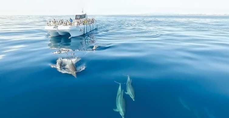 De Albufeira: Cruzeiro de 2,5 Horas com Golfinhos e Grutas