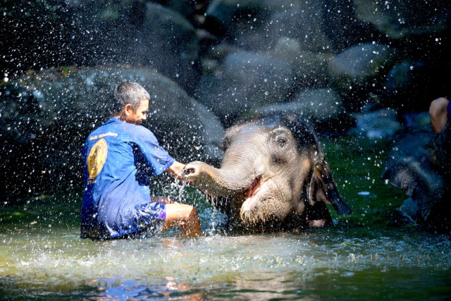 Elephant Care Tour: From Phuket, Phang Nga & Khao Lak