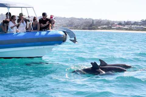 Southern Ocean Adventure Cruise