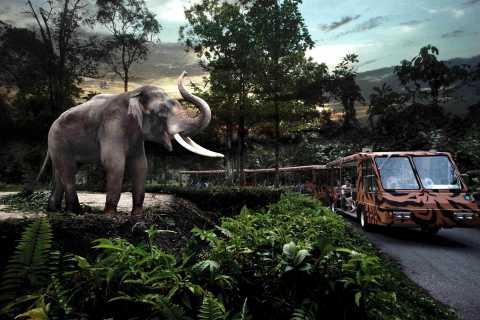 Ticket de safari nocturno, tranvía prioritario y regreso