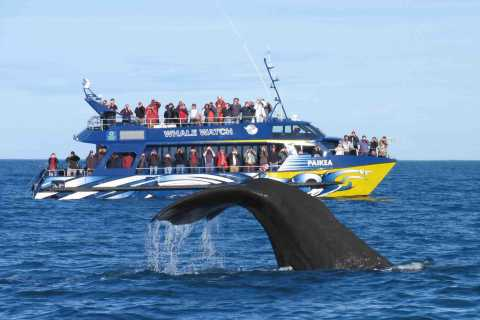 Kaikoura Whale Watching Premium Day Tour from Christchurch