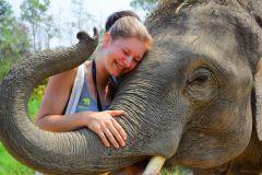 Chiang Mai: Cuidado de Elefantes no Elephant Retirement Park
