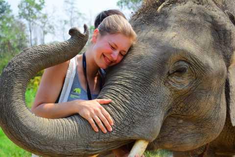 Chiang Mai: Elephant Care at Elephant Retirement Park