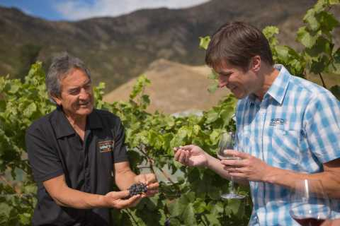 Afternoon Wine Tasting Tour with 3 Wineries & Wine Cave