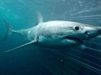 Gansbaai: Umweltfreundliches Käfigtauchen mit Haien