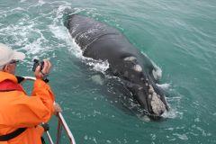Gansbaai: Excursão de Barco Big 5 Marinhos