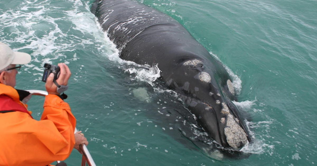 Cape Town: Whale Watching & Marine Big 5 Trip in Gansbaai