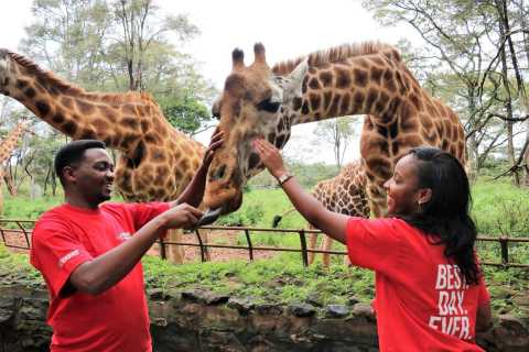 Nairobi: Giraffes & Elephants Small Group Tour