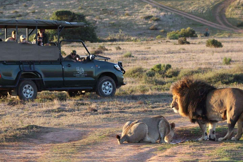 Ab Kapstadt: 2-tägige Safari bei der Garden Route Game Lodge