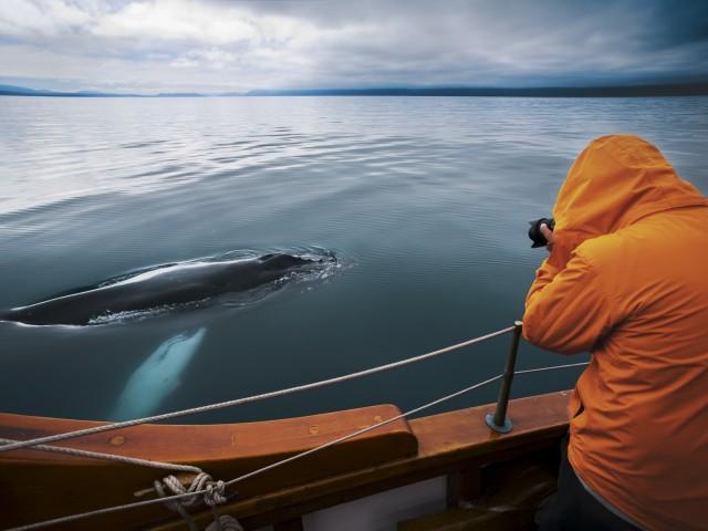 Húsavík: walvisspotten op een koolstofneutrale eikenboot