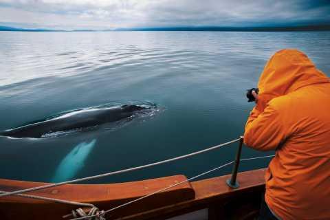 Húsavík: Umweltfreundliche Walbeobachtungstour