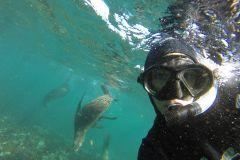 Hout Bay: Mergulho de Snorkel c/ Lobos-Marinhos