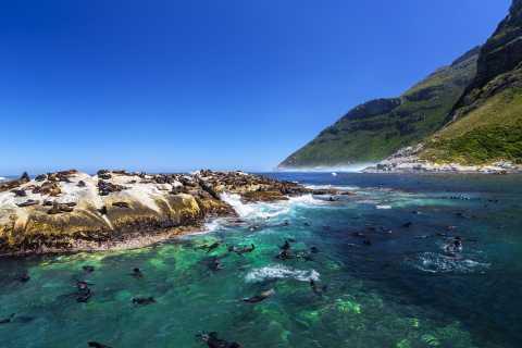 Hout Bay: Schnorcheln mit Pelzrobben