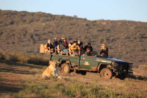 Garden Route 5-Day Tour and Addo Elephant Park Safari