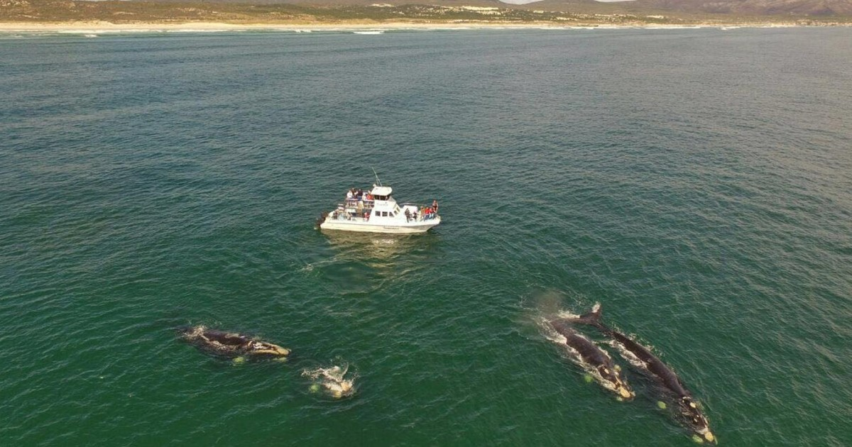 Gansbaai: Whale Watching Trip by Boat
