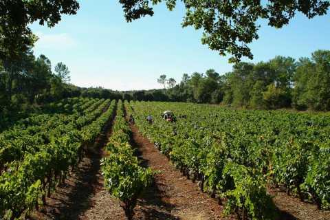 Luberon: tour de un día de vino desde Marsella