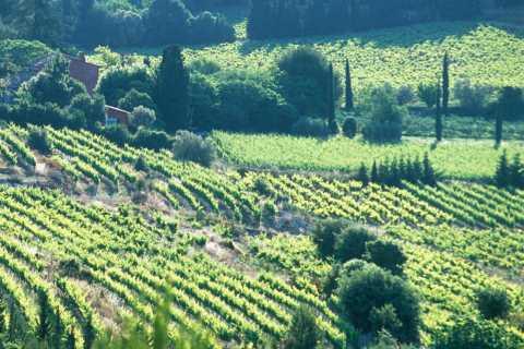 Bandol y Cassis: tour vinícola de día desde Marsella
