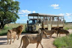 Excursão ao Lion & Safari Park no Berço da Humanidade 1 Dia