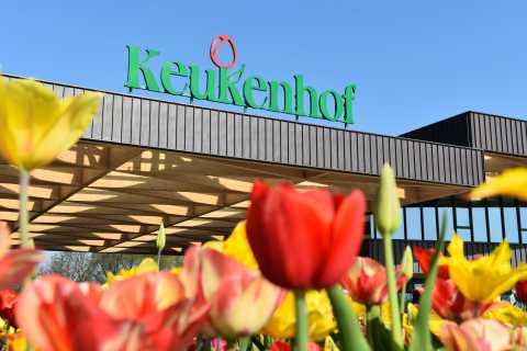 Depuis Rotterdam: parc Keukenhof et champs de fleurs