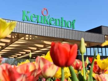 Ab Rotterdam: Keukenhof Park und Blumenfelder