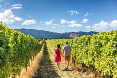 Da San Francisco: 2-Day Muir Woods & Wine Tasting Tour