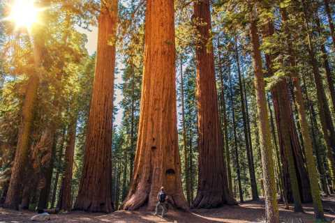 Fra San Francisco: Guidet Big Bus-tur til Muir Woods