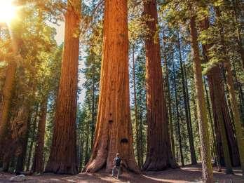 Ab San Francisco: Geführte Bustour zu den Muir Woods