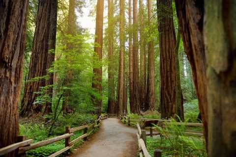 Muir Woods National Monument Tour with Entrance Fee Included