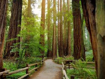 Muir Woods National Monument: Tour inklusive Eintritt