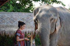 Pattaya: Excursão Ética Interativa Santuário de Elefantes