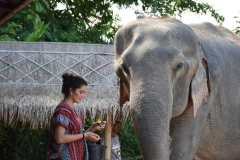 Santuario degli elefanti: tour etico interattivo da Pattaya