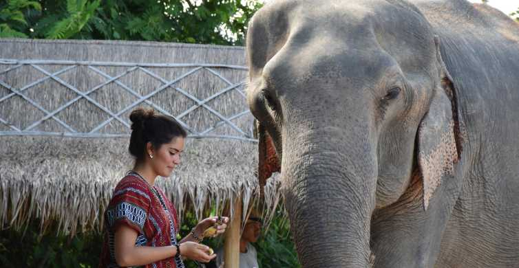 Pattaya: Ethical Elephant Sanctuary Interactive Tour