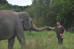 Bangkok: Excursão ao Santuário Ético de Elefantes de Pattaya