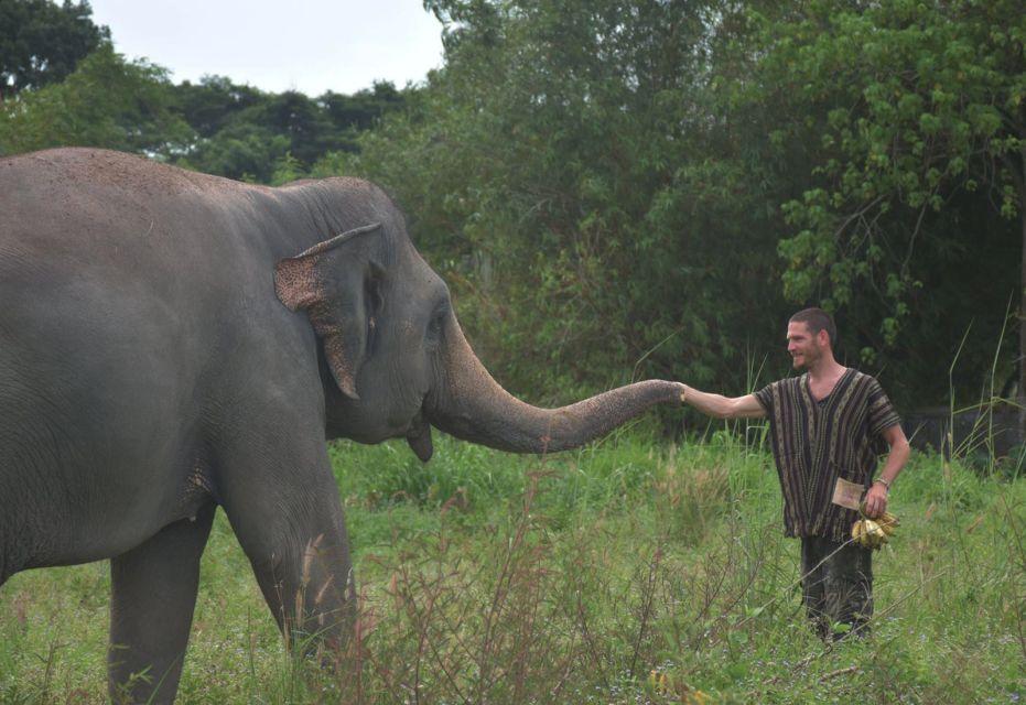 From Bangkok: Pattaya Ethical Elephant Sanctuary Day Trip
