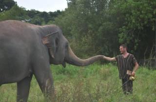 Ab Bangkok: Tagestour zum Elefanten-Schutzgebiet Pattaya