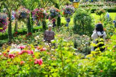 Excursão à Cidade de Victoria e Jardins de Butchart