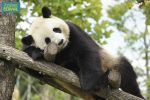 ZooParc de Beauval: Day Admission Ticket