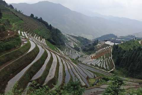 Longji Rice Terraces: Full-Day Private Tour from Guilin