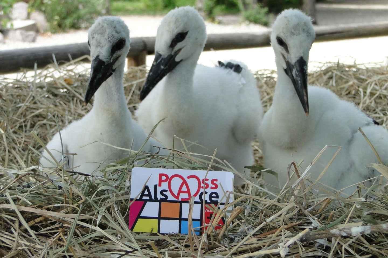 Pass-Alsace: Das Beste aus dem Elsass in der Tasche