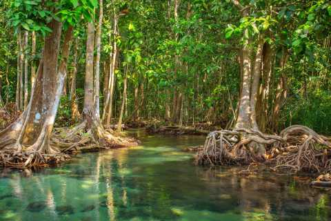 Vam Sat Mangrove Forest Private Tour from Ho Chi Minh City