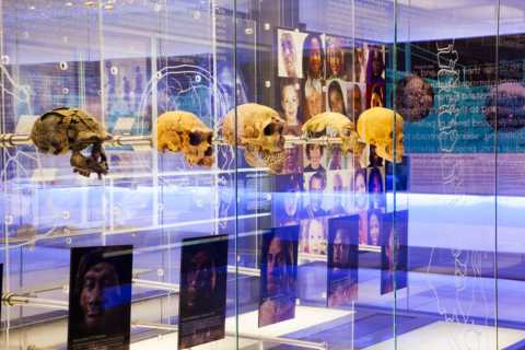 Cradle of Humankind: Shared Half-Day Tour