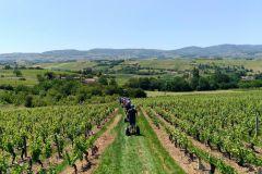 Beaujolais Segway Tour Com Degustação De Vinhos
