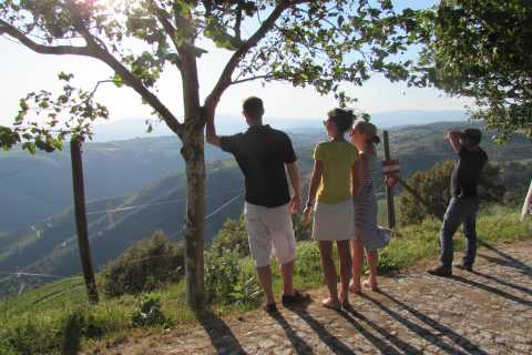 Vale do Douro: Excursão a 3 Vinícolas com Almoço